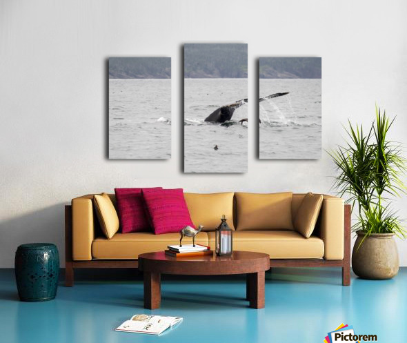 Humback whale a puffin and a murre 4 Canvas print