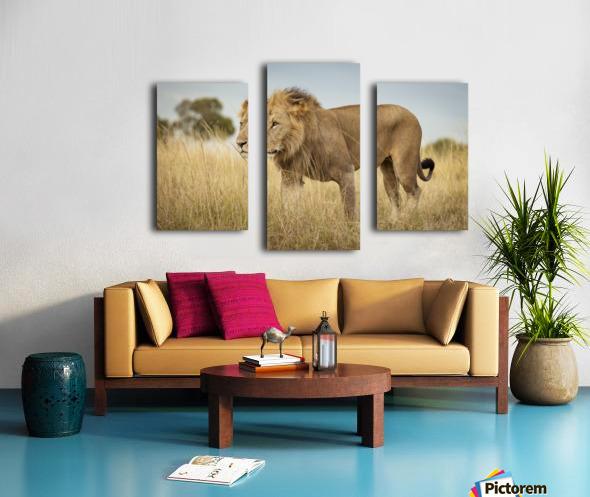 Proud King - 3 Canvas print