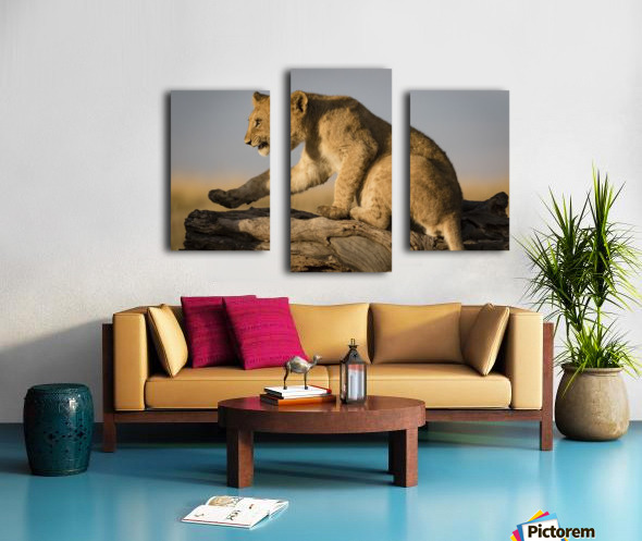 Small Step for Lionkind Canvas print