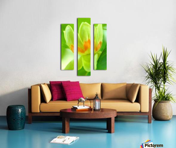 Tulip Poplar Flower Impression sur toile