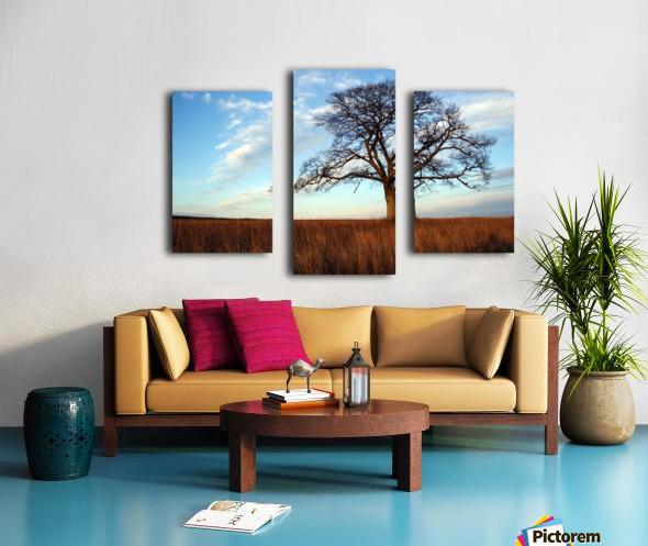 Shubenacadie Tree Canvas print