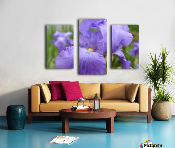Purple Iris Photograph Canvas print