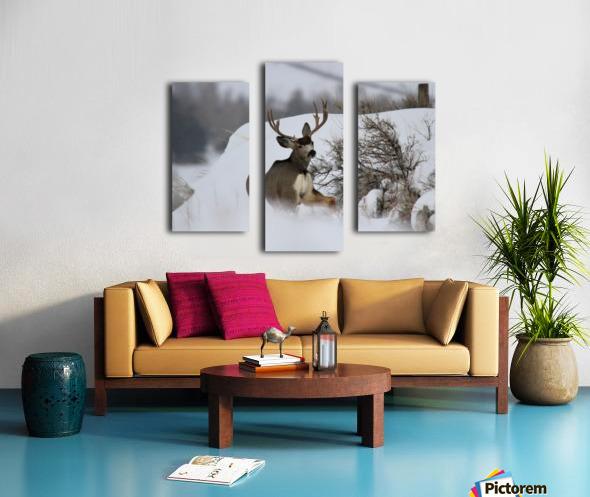 mule Canvas print