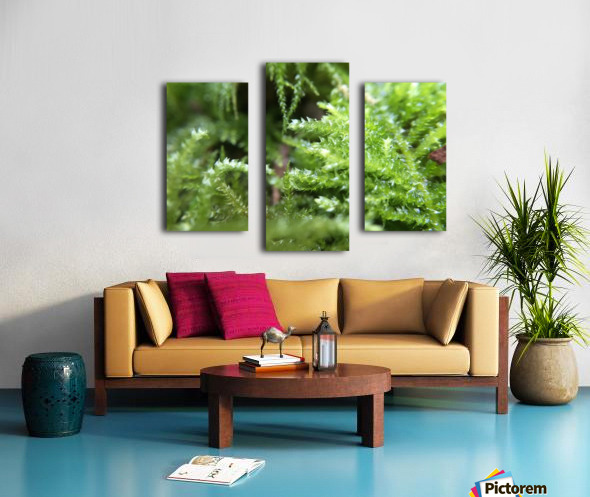 IMG_3563 Canvas print