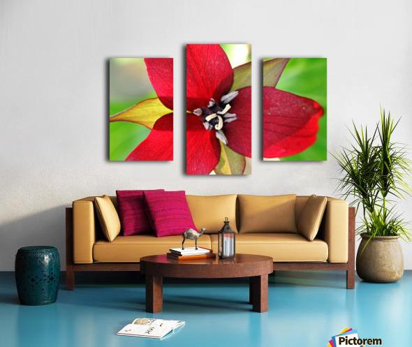 Dark Red Trillium Canvas print