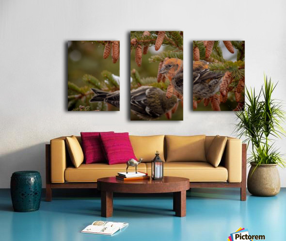Pair of White-winged Crosbills Canvas print