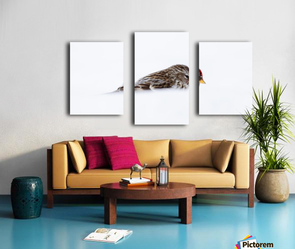 Common Redpoll Canvas print