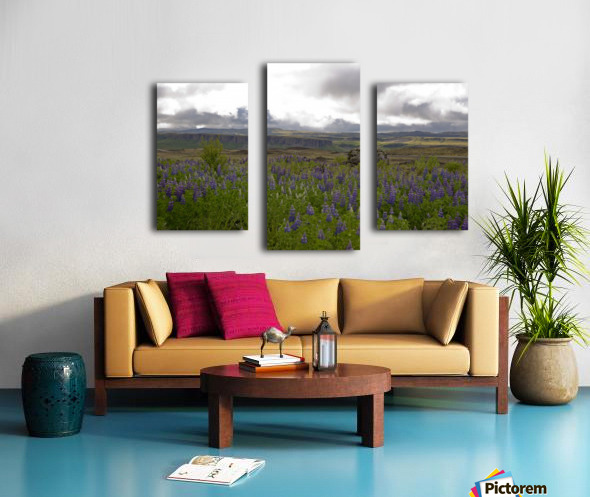 Iceland in Bloom Canvas print