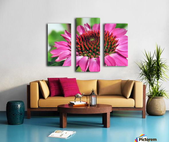 Pink coneflower  Canvas print