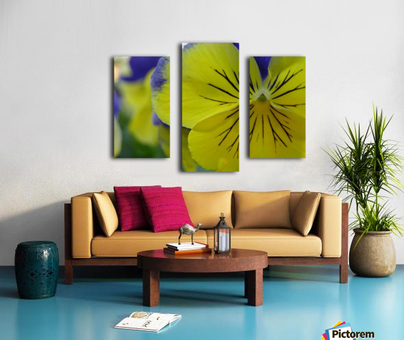 Yellow Pansy Photograph Canvas print