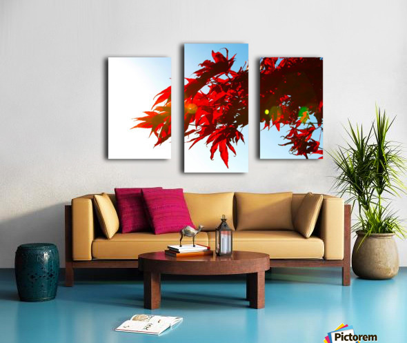 Chinese Maple Impression sur toile