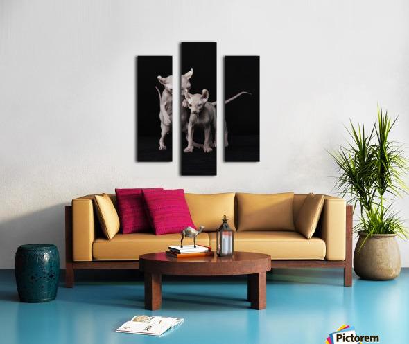 Elf Sphinx kittens Canvas print