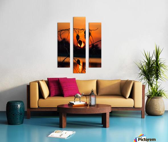 Vine Milkweed at Sunset Canvas print