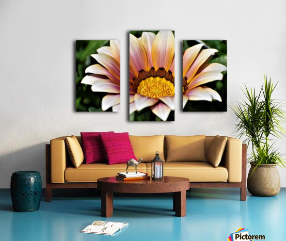 Gazania Flower Photograph in Orange and Pink Canvas print