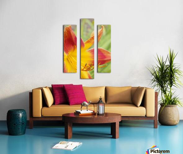 Peach Lilly Canvas print