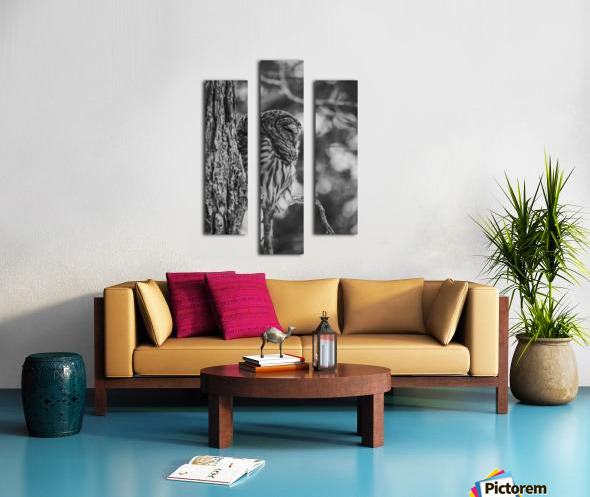 Black and white Barred Owl Canvas print
