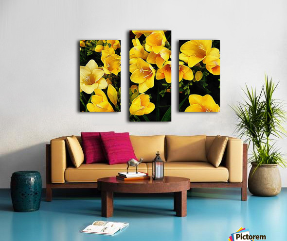 Yellow Freesias Canvas print