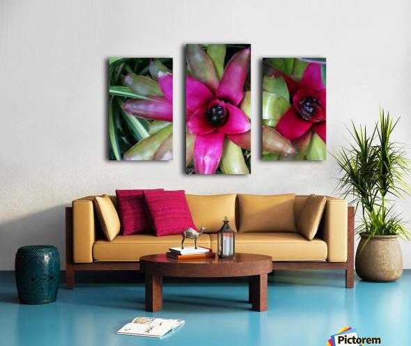 Bromeliad Canvas print