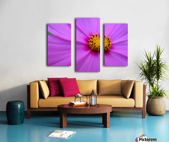 Purple Cosmo Canvas print