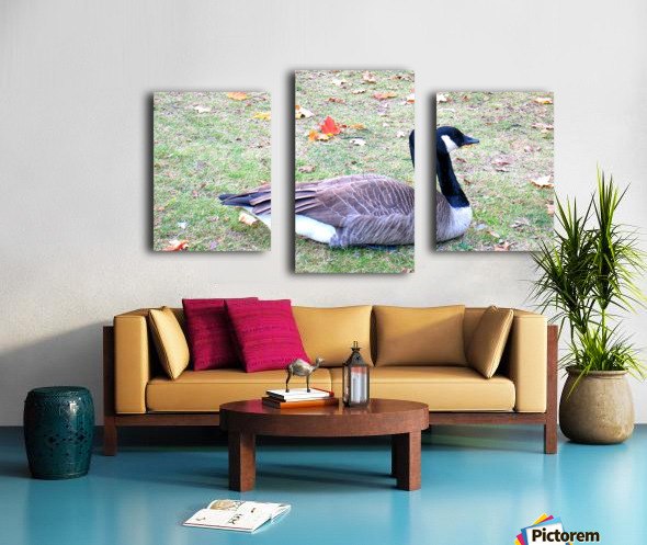 duck (3) Canvas print