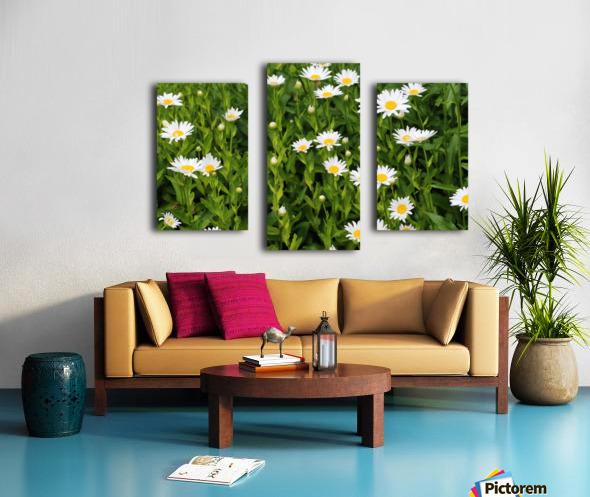 Dow Gardens Daisies 062618 Canvas print