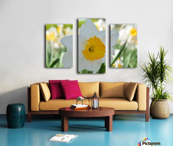 White Daffodil Photograph Canvas print