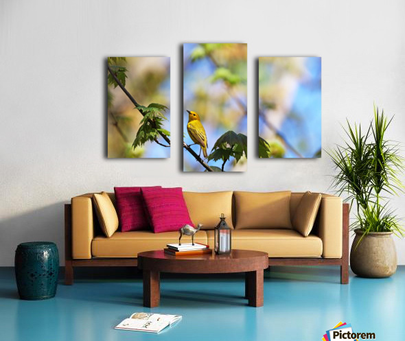 Yellow Warbler In Maple Tree Canvas print