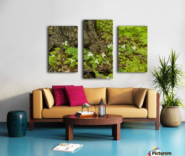 Trillium Woods 10 Canvas print