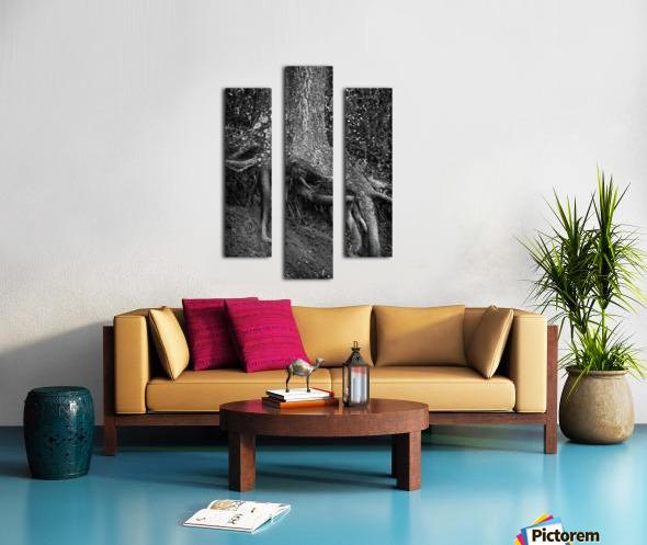 Roots... Canvas print