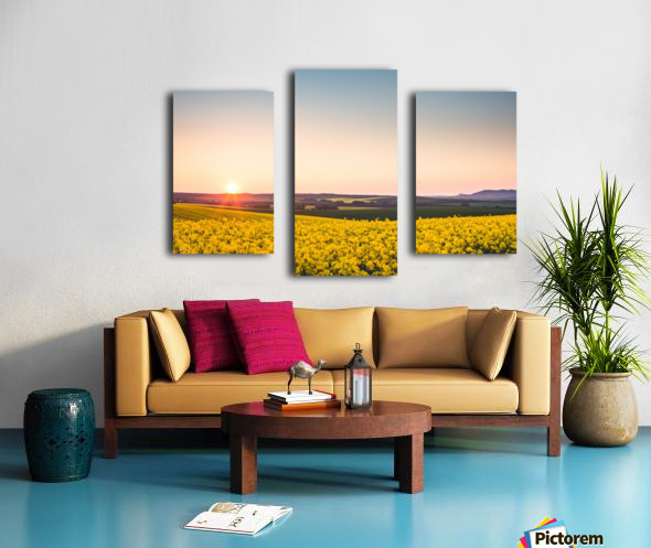 Beautiful sunset over the yellow rapeseed field. Canvas print