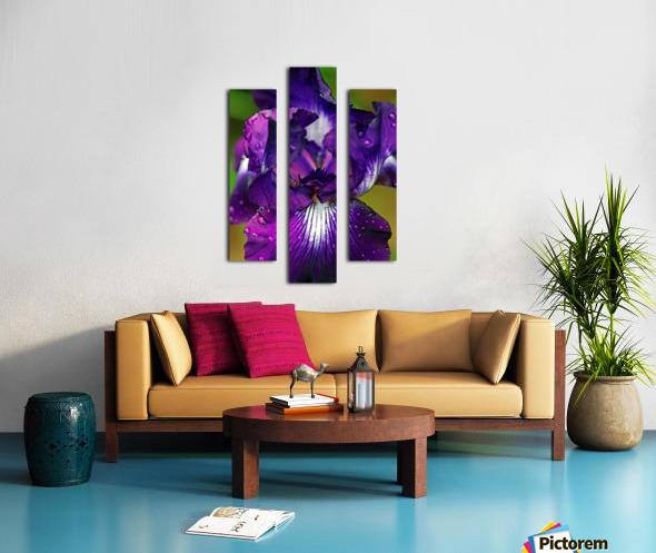 Purple With White Splash Iris Canvas print