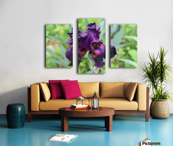 Purple Iris Impression sur toile