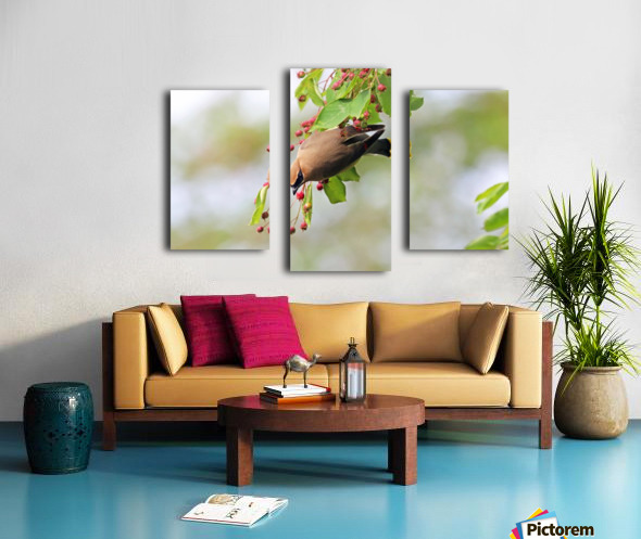 Which One Do You Think I Should Choose Canvas print