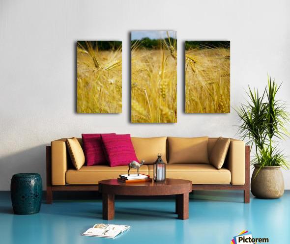 Corn Cob Landscape 06 Canvas print