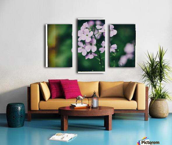 Phlox in Bloom Canvas print