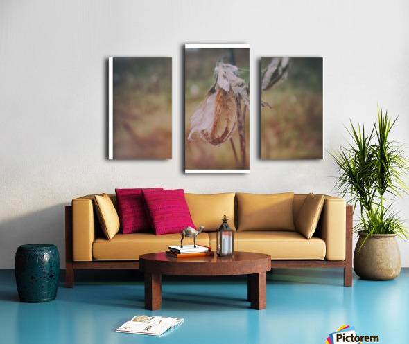 Milk Weed Canvas print