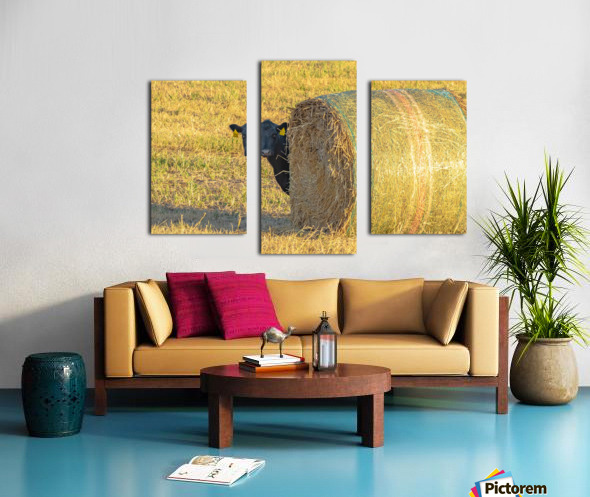 Hay.You Looking For Me Canvas print