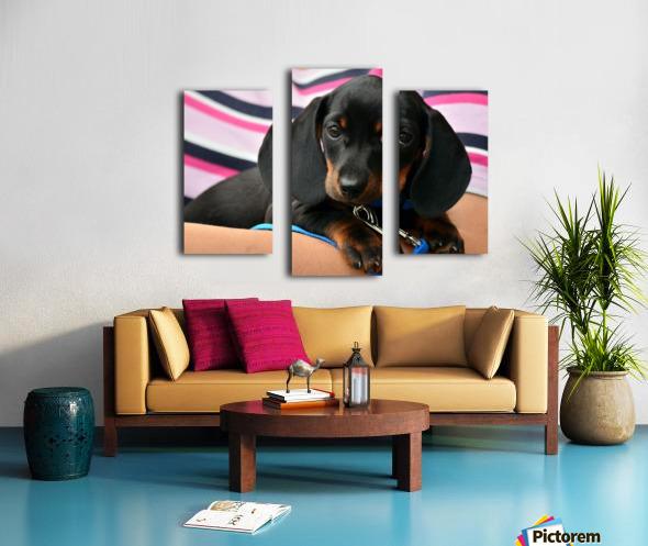 dachshund puppy young animal Canvas print