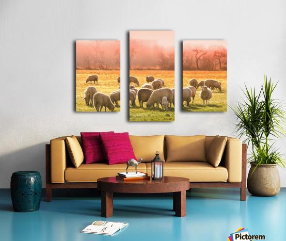 animal sheep flock of sheep meadow Canvas print
