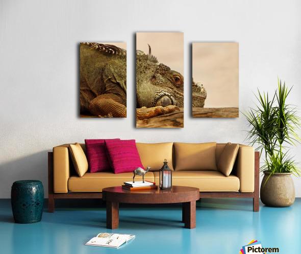 animal reptile lizard iguana Canvas print