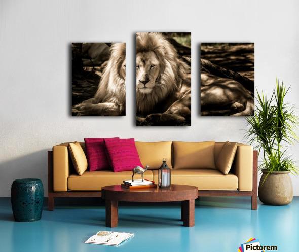 mammal lion animal portrait Canvas print