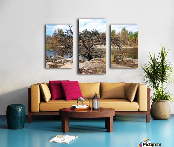 The Pine Tree I Canvas print