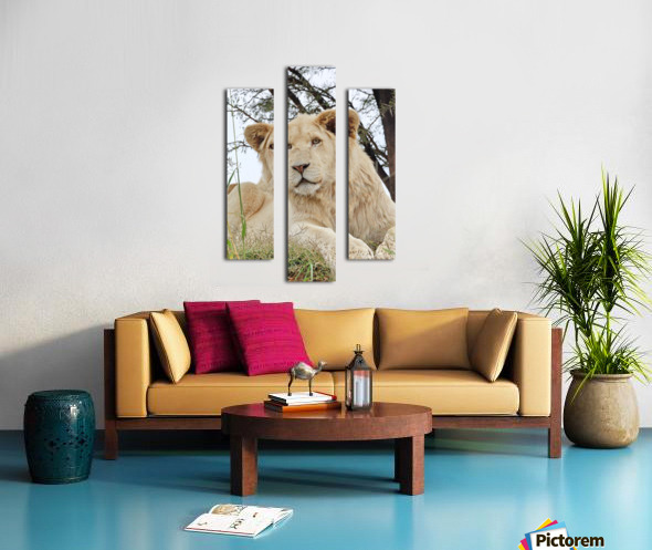 Young White Lion Male Canvas print
