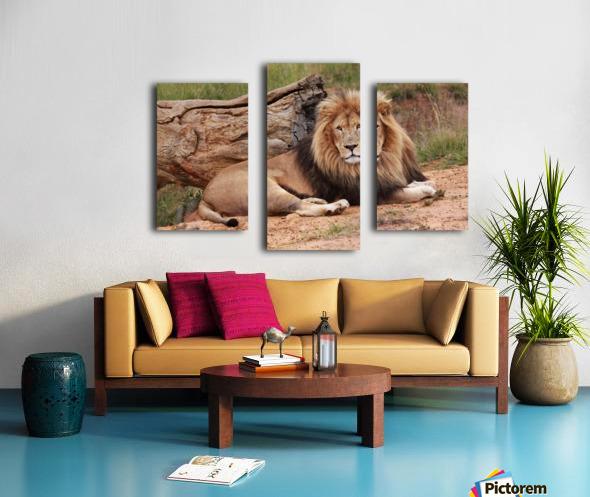 Brown Lion Male 9027 Canvas print