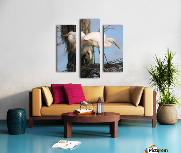 Mating Season - Great Egrets I Canvas print