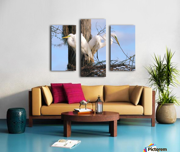 Mating Season - Great Egrets II Canvas print