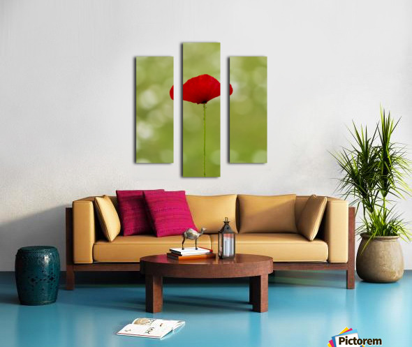 A solo Red Poppy Canvas print