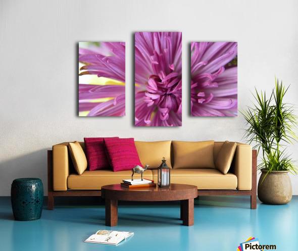 Fuscia-Colored Aster Canvas print