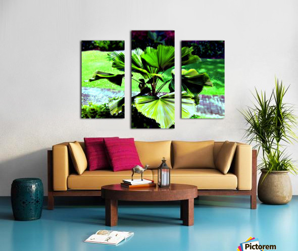 Licuala peltata Leaves Canvas print