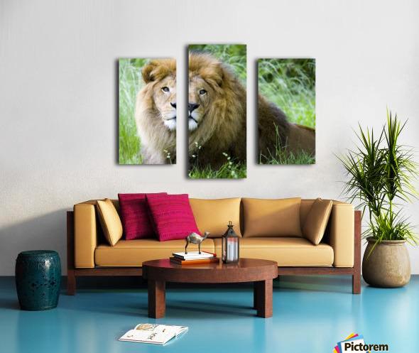 Simba Canvas print